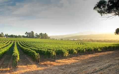 The oldest winemaking region in the New World is a delight to explore - Credit: Getty