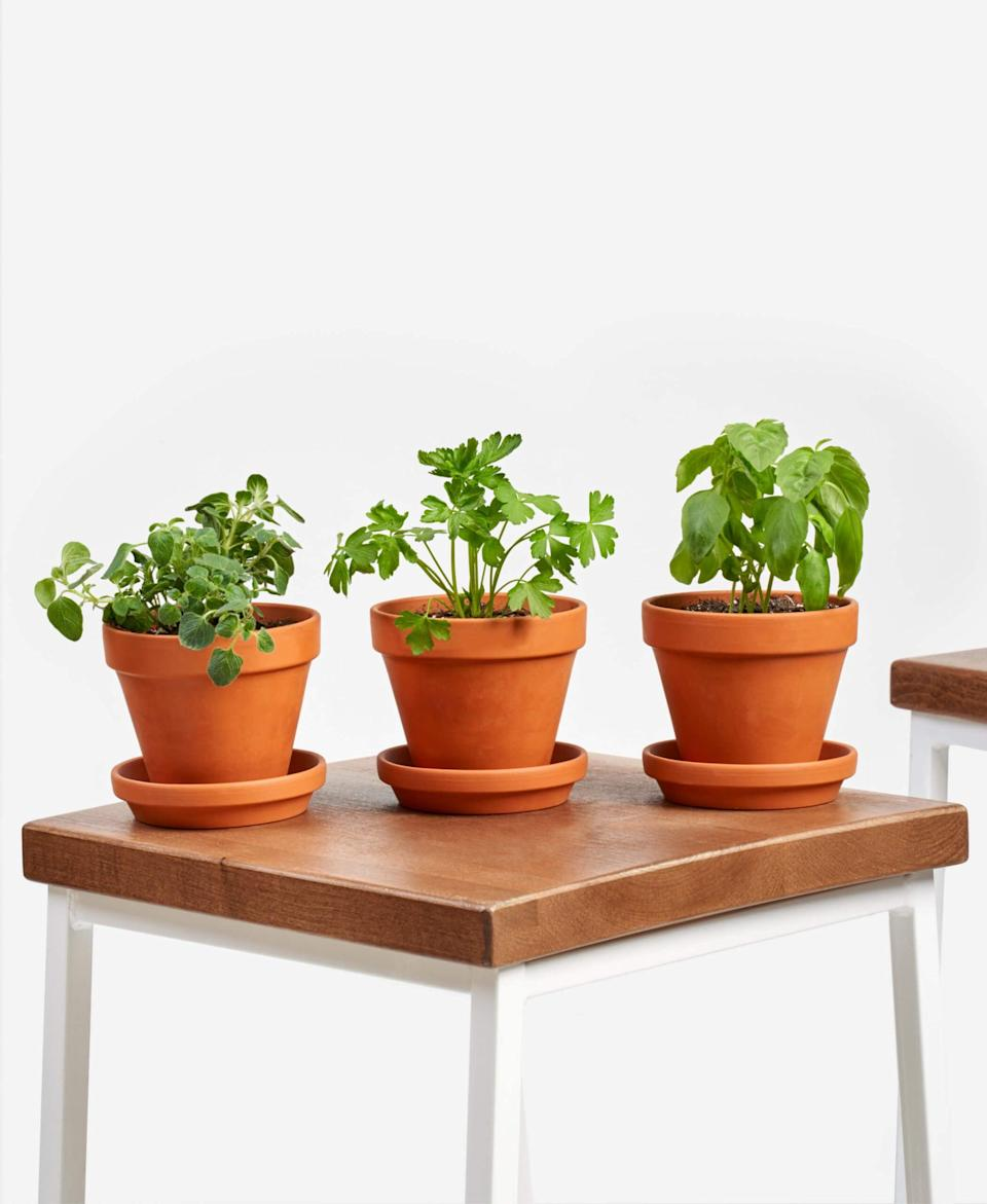 "<p>Take your favorite meals to a whole new level with the basil, parsley, and oregano in the <a href=""https://www.popsugar.com/buy/Savory-Herbs-Collection-571562?p_name=Savory%20Herbs%20Collection&retailer=bloomscape.com&pid=571562&price=65&evar1=casa%3Auk&evar9=46114279&evar98=https%3A%2F%2Fwww.popsugar.com%2Fhome%2Fphoto-gallery%2F46114279%2Fimage%2F47449685%2FSavory-Herbs-Collection&prop13=api&pdata=1"" class=""link rapid-noclick-resp"" rel=""nofollow noopener"" target=""_blank"" data-ylk=""slk:Savory Herbs Collection"">Savory Herbs Collection</a> ($65).</p>"