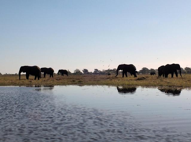 The couple visited Botswana early in their relationship. (Photo: Flickr/Tee La Rosa)