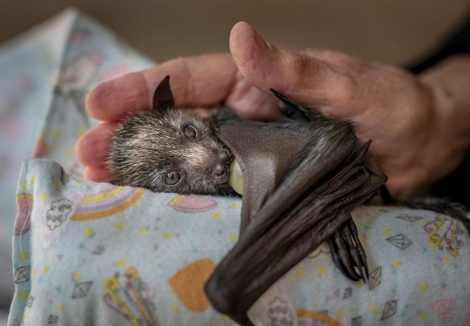 A caring hand by Douglas Gimsey (Douglas Gimesy/Wildlife Photographer of the Year)