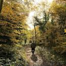"<p>When the hustle of the city gets overwhelming, take the overground to Sydenham Hill and walk along the leafy paths of its neighbouring ancient <a href=""https://www.wildlondon.org.uk/nature-reserves/sydenham-hill-wood-and-coxs-walk"" rel=""nofollow noopener"" target=""_blank"" data-ylk=""slk:Sydenham Hill Wood"" class=""link rapid-noclick-resp"">Sydenham Hill Wood</a>, also known as London Wildlife's Trust's oldest nature reserve. Expect wildlife aplenty - it's home to 200 species of trees and plants and woodland fauna, such as bats, woodpeckers and tawny owls. </p><p><a href=""https://www.instagram.com/p/CFcSw0rHxQU/?utm_source=ig_embed&utm_campaign=loading"" rel=""nofollow noopener"" target=""_blank"" data-ylk=""slk:See the original post on Instagram"" class=""link rapid-noclick-resp"">See the original post on Instagram</a></p>"