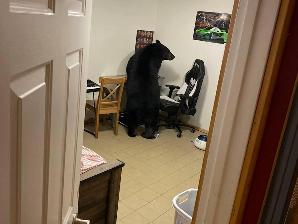 Sean Reddy had a black bear climb through a bedroom window on Oct. 4, around 8 p.m., at his home outside Fort McMurray, Alta.,  (Submitted by Sean Reddy - image credit)