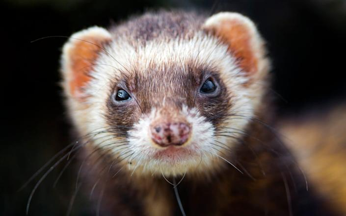 """Andrew Bridgen said: """"It is about time the EU performed a reverse ferret."""" - Getty"""