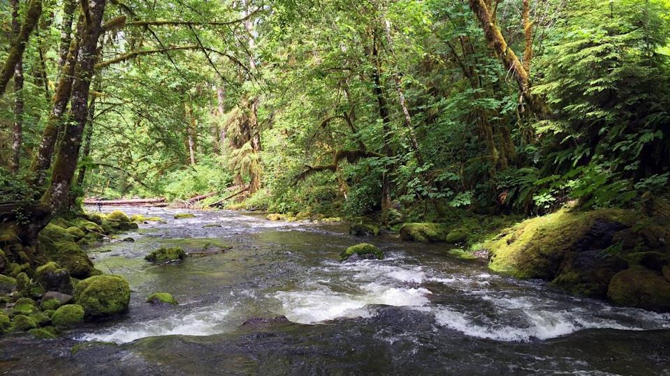 """<span class=""""caption"""">Environmental DNA is a promising tool for tracking species in freshwater ecosystems like Oregon's Elkhorn Creek.</span> <span class=""""attribution""""><a class=""""link rapid-noclick-resp"""" href=""""https://flic.kr/p/NZgE7n"""" rel=""""nofollow noopener"""" target=""""_blank"""" data-ylk=""""slk:Greg Shine, BLM/Flickr"""">Greg Shine, BLM/Flickr</a>, <a class=""""link rapid-noclick-resp"""" href=""""http://creativecommons.org/licenses/by/4.0/"""" rel=""""nofollow noopener"""" target=""""_blank"""" data-ylk=""""slk:CC BY"""">CC BY</a></span>"""