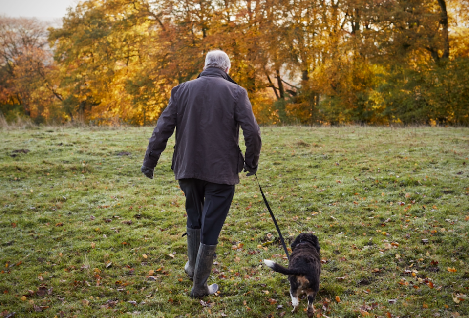 <em>Dog walkers in Canterbury face £80 fines for not carrying two bags (Rex/posed by model)</em>