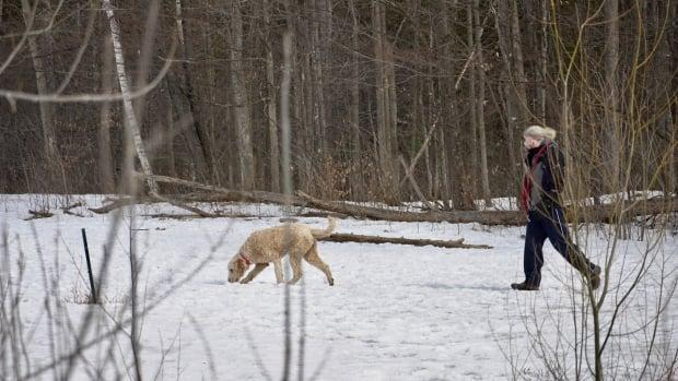 A woman walks her dog in an off-leash part of a snowy park in Gatineau, Que., in March.