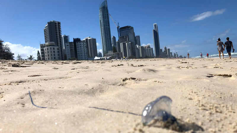 Beaches shut as invasion of venomous jellyfish leaves thousands stung