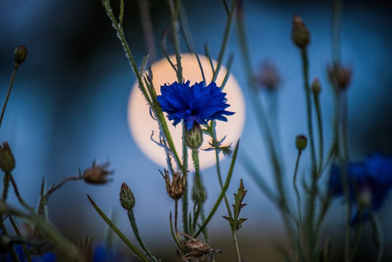 Try one of these Blue Flower Moon rituals this weekend if you want to blossom into your best self
