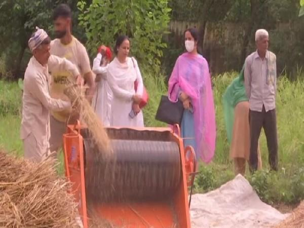 Farmers in Udhampur district are using paddy thresher