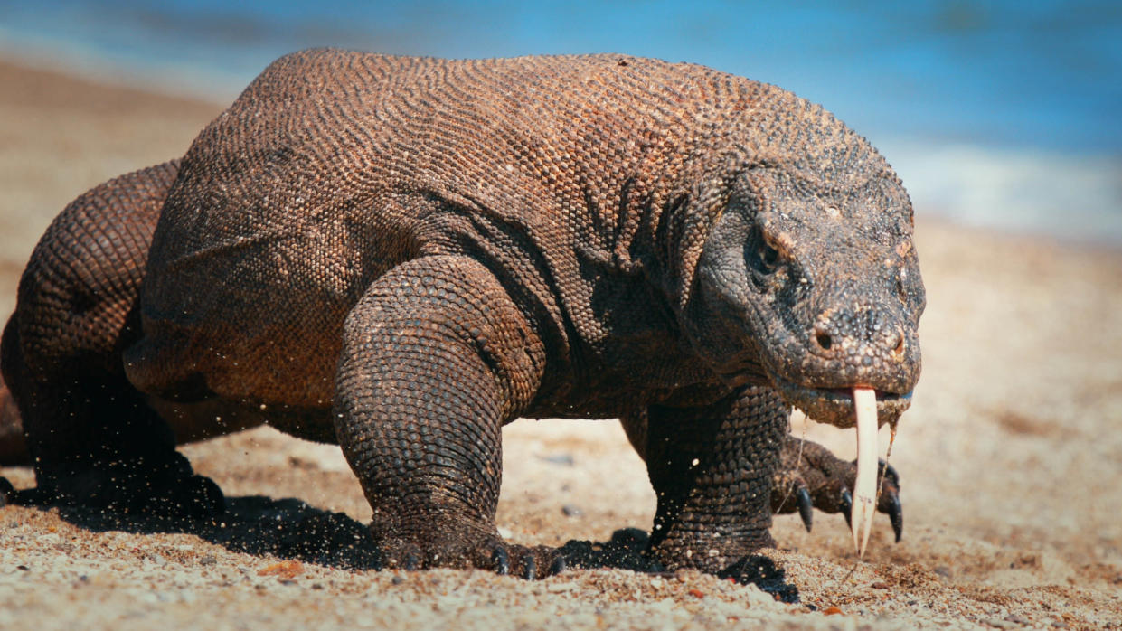 'Impossible Animals with Patrick Aryee' explores some of the world's most remarkable creatures. (Offspring Films/Sky)