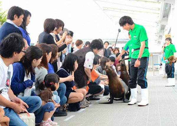 ▲ In the Plaza of Marine Animals you can touch South American sea lions and Humboldt penguins.