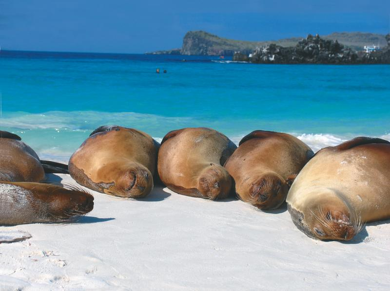 Seals on a white sand beach with blue water
