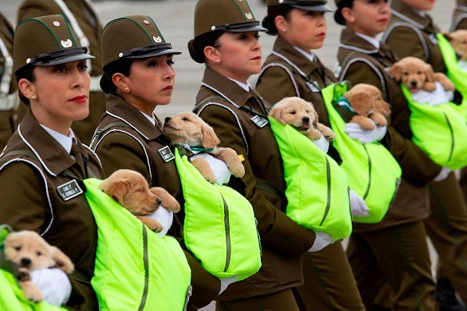 """<p>This should really be the only picture in here. Police officers and soldiers in Chile <a href=""""https://www.businessinsider.com/puppies-at-chile-annual-military-parade-2018-9"""" rel=""""nofollow noopener"""" target=""""_blank"""" data-ylk=""""slk:march in the annual military parade with puppies"""" class=""""link rapid-noclick-resp"""">march in the annual military parade with puppies </a>training to be police dogs.</p>"""