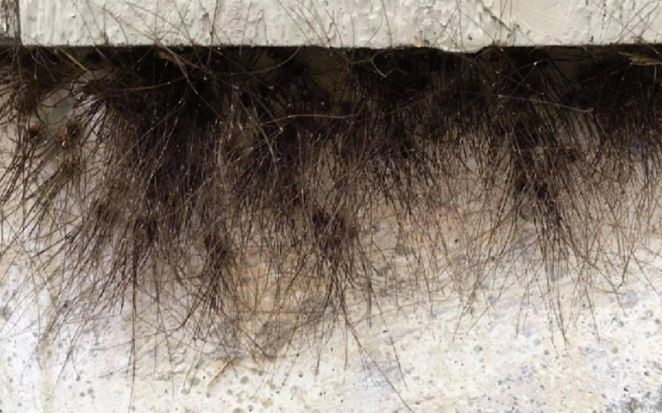 Avoid buildings that look like they're growing fur, or you're in for a fright
