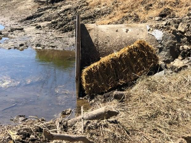 According to the Nature Trust, a beaver dam that was blocking this culvert was destroyed by DTI workers.