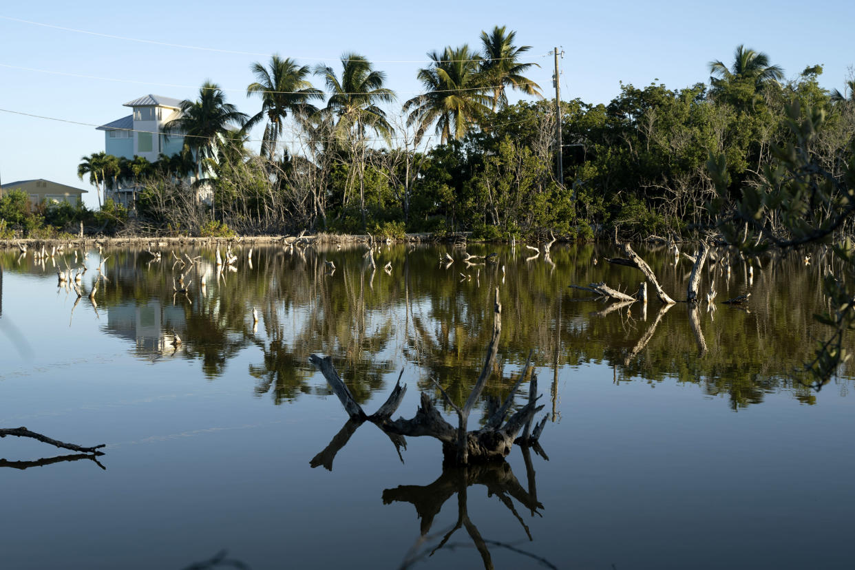 Saltwater and dead trees just off State Road 4A on Sugarloaf Key, Fla., on Dec. 3, 2019. (Angel Valentin/The New York Times)