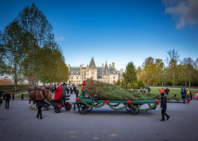 Biltmore's holiday centerpiece - the towering Banquet Hall Christmas Tree - arrived Nov. 1, 2019, during the estate's annual tree-raising day. The event kicks off a two-month holiday celebration that includes daylight and candlelight evening tours of Biltmore House, tours through a poinsettia-filled Conservatory, a large light display in Antler Hill Village, and more.