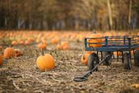 """<p><strong>Cumming, Iowa</strong></p><p>Goat yoga season may be over, but there's plenty of fun to be had at <strong><a href=""""http://howellspumpkins.com/howells-pumpkin-patch-farm-fun-activities.htm"""" rel=""""nofollow noopener"""" target=""""_blank"""" data-ylk=""""slk:Howell's Pumpkin Patch"""" class=""""link rapid-noclick-resp"""">Howell's Pumpkin Patch</a> </strong>throughout the fall season. Horse-drawn wagon rides (wheelchair accessible!), go carts and antique tractors are some of the things you'll spot at this farm, which is just a short drive from Des Moines. Admission is $11 per person ages 2 and older and includes a variety of fun activities.</p><p><em>*This photo is not from Howell's Pumpkin Patch.</em></p>"""