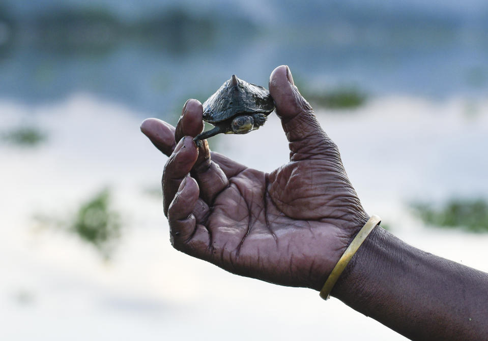 A man holds a turtle which was found in floodwater, at Panikhaiti in Kamrup district of Assam in India on Wednesday, July 15, 2020. (Photo by David Talukdar/NurPhoto via Getty Images)