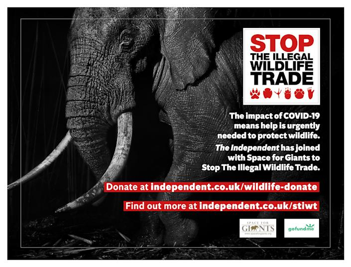 We are working with conservation charity Space for Giants to protect wildlife at risk from poachers due to the conservation funding crisis caused by Covid-19. Help is desperately needed to support wildlife rangers, local communities and law enforcement personnel to prevent wildlife crimeThe Independent
