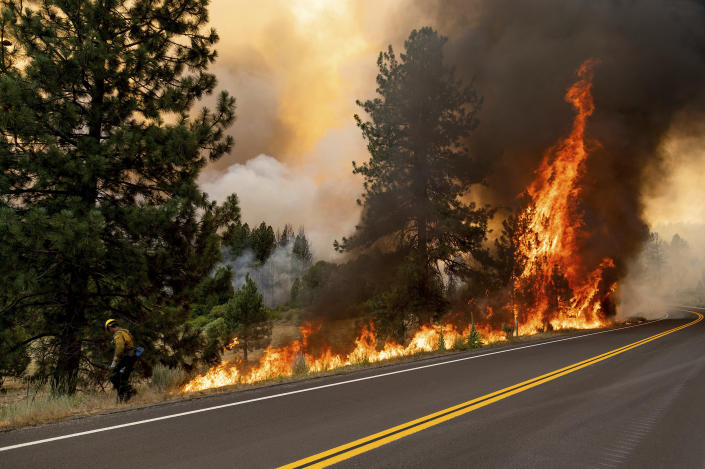 A firefighter burns vegetation while trying to stop the Sugar Fire, part of the Beckwourth Complex Fire, from spreading in Plumas National Forest, Calif., on Friday, July 9, 2021. (AP Photo/Noah Berger)
