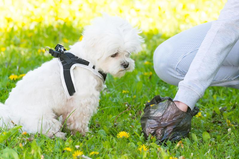Sponsorship: Businesses can advertise their services on the side of dog poo bags: Shutterstock / Monika Wisniewska
