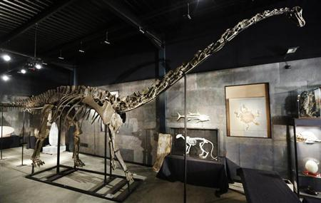 """A diplodocus skeleton named """"Misty"""" is seen at Summers Place Auctions in Billingshurst, southern England"""