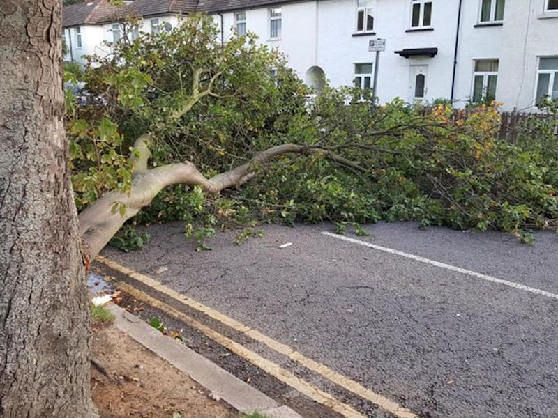 Branch in a road in Grays, Essex, as Storm Aileen batters the UK: PA/Gary Malley