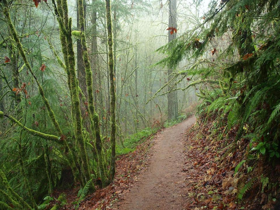 """<p><strong>We're thinking about a nature outing. Set the scene for us.</strong><br> Defining the Portland skyline, this nearly 5,200-acre expanse of deep, dense, Pacific Northwest forest—one of the largest urban green spaces in the country—is criss-crossed with more than 80 miles of spectacular scenic trails and forest roads, so you can hike, bike, run, and walk to your as far as you like, all without ever leaving the city limits. Fun fact: Although the park wasn't officially established until 1948, the idea of preserving the space as a """"forest park"""" was originally proposed in 1903 by landscape architects John and Frederick Olmsted—sons of Frederick Law Olmsted, co-designer of <a href=""""https://www.cntraveler.com/activities/new-york/central-park?mbid=synd_yahoo_rss"""" rel=""""nofollow noopener"""" target=""""_blank"""" data-ylk=""""slk:New York's Central Park"""" class=""""link rapid-noclick-resp"""">New York's Central Park</a>—who were hired to help design rapidly growing Portland's master park plan.</p> <p><strong>What kinds of trails will we find around the park?</strong><br> For a half-day trek with serious views and a delicious ending, start at Lower Macleay Park, take the Lower Macleay Trail until it intersects with the 30-mile Wildwood Trail, then continue up to the historic Pittock Mansion for a picnic on the beautiful back lawn. If you're more in the market for a half-hour hike, but still want the full forest effect, take the Lower Macleay Trail through the cool, quiet canyon as far as the famous/infamous Stone House—a.k.a. the Witch's Castle—a crumbling, moss-shrouded former rest stop built by the city in the 1930s. Even on this short trip, there's plenty to see; keep an eye out for the city's largest Douglas Fir, a 242-foot arborists' wonder, Balch Creek's coastal cutthroat trout and giant salamanders, and a whole host of native foliage, from lush licorice ferns to salmonberry bushes.</p> <p><strong>How easy is it to navigate all that nature?</strong><br> Trail markers are relative"""