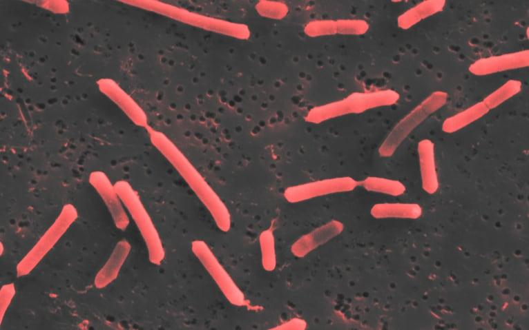 Single strains of bacteria have the potential to slow down or ever cure illnesses, scientists believe  - 4D Pharma