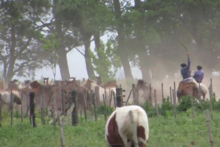 Imagen del documental de Animal Welfare Foundation que denuncia maltrato animal en Ayacucho