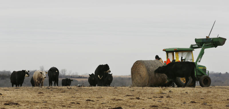 In this Tuesday, Feb. 12, 2013 photograph, Randy Cree cuts the twine on a bale of hay while feeding cattle on his farm near Big Springs, Kan. Years of drought are reshaping the U.S. beef industry with feedlots and a major meatpacking plant closing because there are too few cattle left in the United States to support them. (AP Photo/Orlin Wagner)