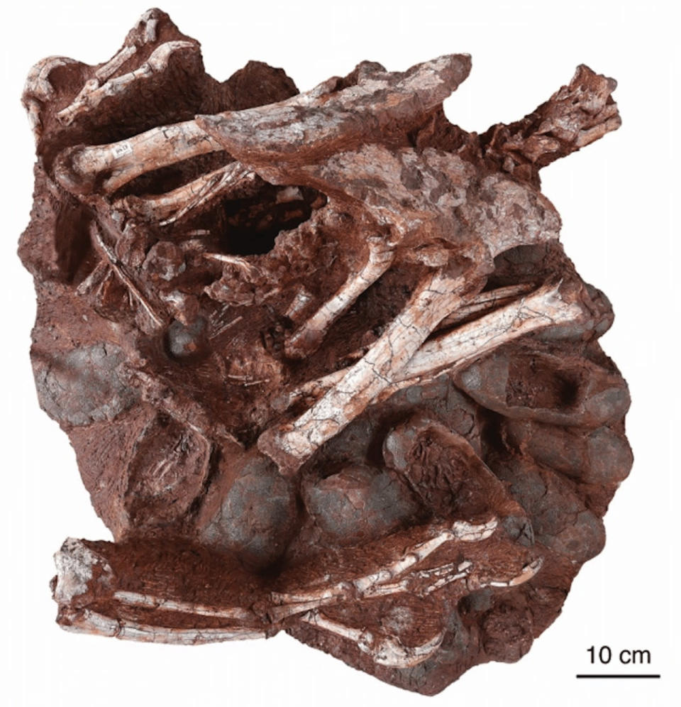 Dinosaur fossil atop nest with eggs is world's first, scientists say