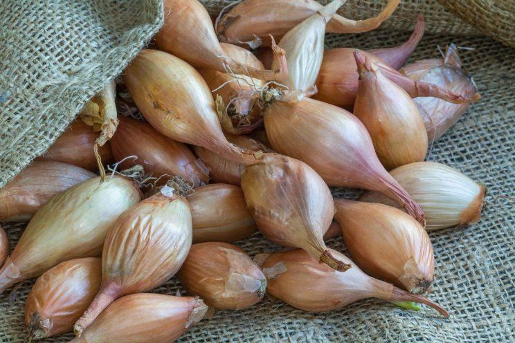 Onions are best stored at room temperature [Photo: Getty]