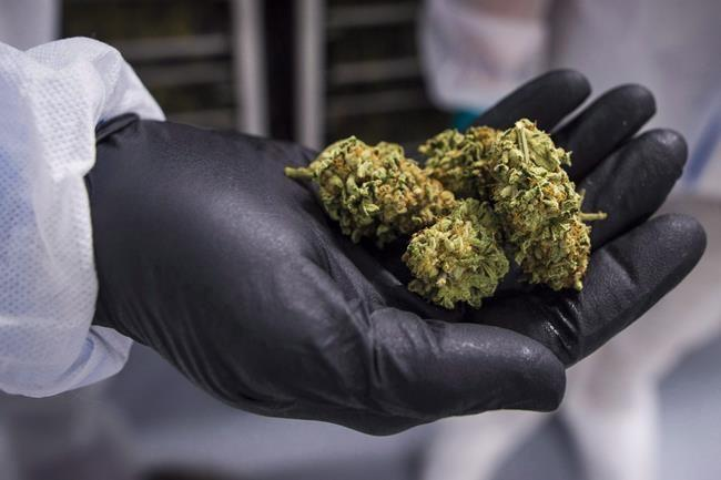 CannTrust says goods returned by Alberta government cannabis firm worth $1.3M