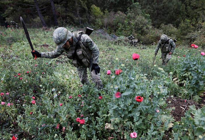 <p>Soldiers destroy poppy plants during a military operation in the municipality of Coyuca de Catatlan in Mexico, April 18, 2017. (Photo: Henry Romero/Reuters) </p>