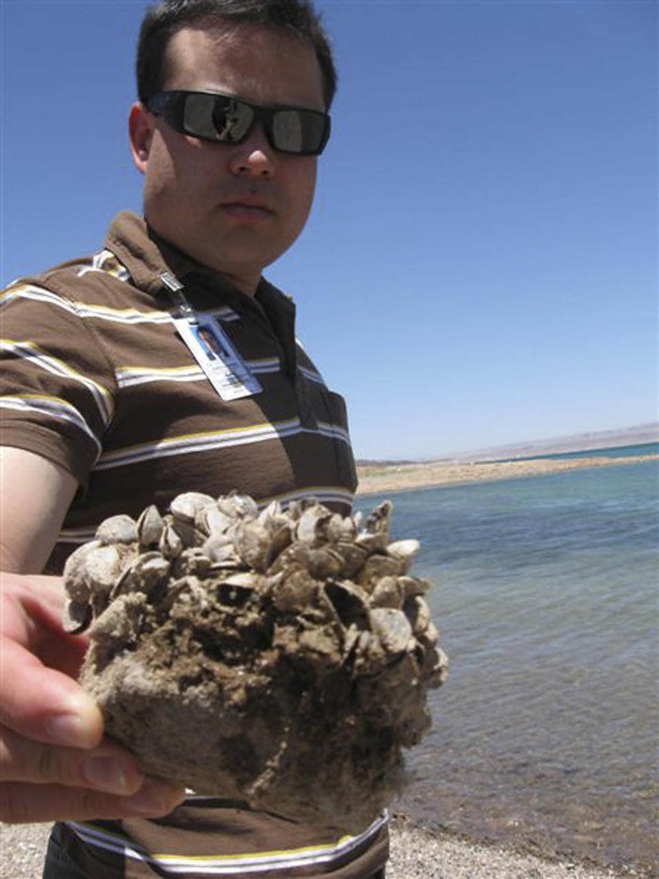 File - In this July 6, 2009 file photo, Andrew Munoz, of the Lake Mead National Recreation Area, holds up a rock covered with the invasive quagga mussels at Lake Mead National Recreation Area, Nev. A regional power planning group from Idaho, Oregon, Washington and Montana is pursuing $2 million from the federal government to help fend off the menace of invasive mussels that have clogged Colorado River reservoirs since 2007. These states and others say they're frustrated by the number of boats that continue to come from Lake Mead in Nevada and Arizona over their borders infested with quagga and zebra mussels. (AP Photo/Felicia Fonseca, File)