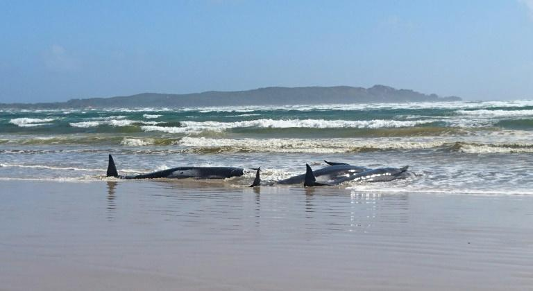 Police and marine experts are assessing the situation ahead of plans to rescue around 250 whales stranded on a sandbar in Tasmania's Macquarie Harbour