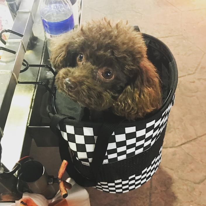 Dogs sometimes appear in bags - Nicola Smith