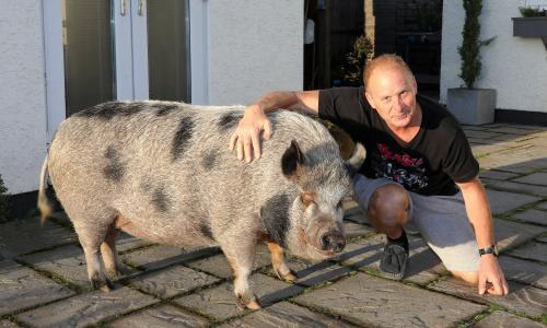 Big porkie: why do we keep falling for the myth of the micro pig?