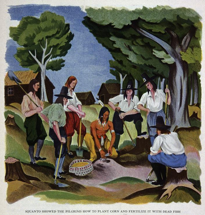 """Squanto shows the pilgrims of the Mayflower how to plant corn and fertilize it with dead fish. Illustration circa 1930<span class=""""copyright"""">Cci/Shutterstock</span>"""