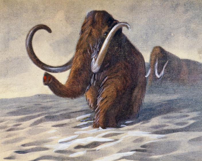 UNSPECIFIED - CIRCA 2006:  Ice Age Mammoths, antediluvian animals, Prehistory. Paris, Bibliothèque Des Arts Decoratifs (Library) (Photo by DeAgostini/Getty Images)