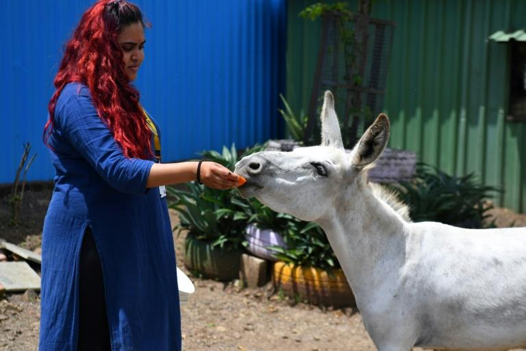 Charity head Jessica Roberts says that the singing donkey has had a massive response from the public (AFP Photo/Indranil MUKHERJEE)