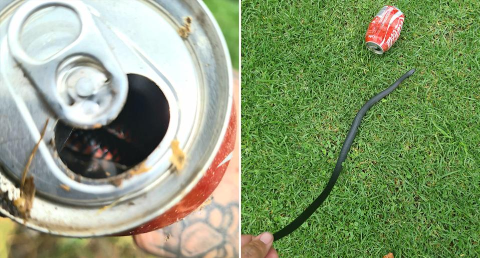 A red-bellied black snake hides in a coke can (left) and four hours later it slithered out (right)
