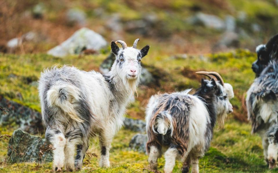 Try a Northumbrian expedition with some furry friends
