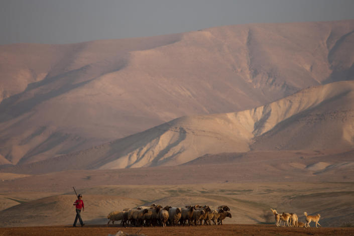 A young Palestinian shepherd herds his flock near a settlement of Patzael in the Jordan Valley, a strip of West Bank land along the border with Jordan, Thursday, Jan. 2, 2014. A senior Israeli Cabinet minister and more than a dozen hawkish legislators poured cement at a construction site in a settlement in the West Bank's Jordan Valley on Thursday, in what they said was a message to visiting U.S. Secretary of State John Kerry that Israel will never relinquish the strategic area. (AP Photo/Oded Balilty)
