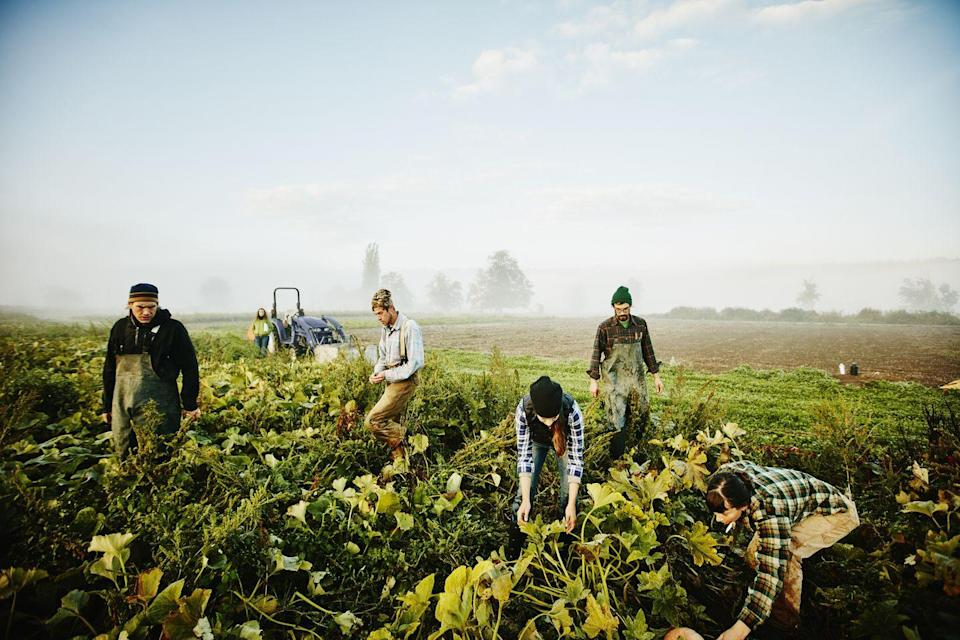 """<p>Within Mutual Aid groups, community members take direct action to care for one another, especially to combat issues like food insecurity. They've grown more popular since the start of the pandemic, meaning many communities already have a network in place. To find one near you, search social media or <a href=""""https://www.mutualaidhub.org/"""" rel=""""nofollow noopener"""" target=""""_blank"""" data-ylk=""""slk:Mutual Aid Hub"""" class=""""link rapid-noclick-resp"""">Mutual Aid Hub</a>. And if there isn't an organization already, go ahead and <a href=""""https://gdoc.pub/doc/e/2PACX-1vRMxV09kdojzMdyOfapJUOB6Ko2_1iAfIm8ELeIgma21wIt5HoTqP1QXadF01eZc0ySrPW6VtU_veyp?"""" rel=""""nofollow noopener"""" target=""""_blank"""" data-ylk=""""slk:start one"""" class=""""link rapid-noclick-resp"""">start one</a>—you'll find that plenty of people near you want to help too.</p>"""