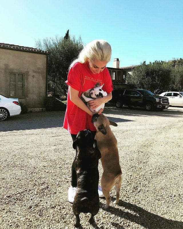 <p>Koji and Asia were thrilled to welcome Gustav to the pack in November 2016. </p>