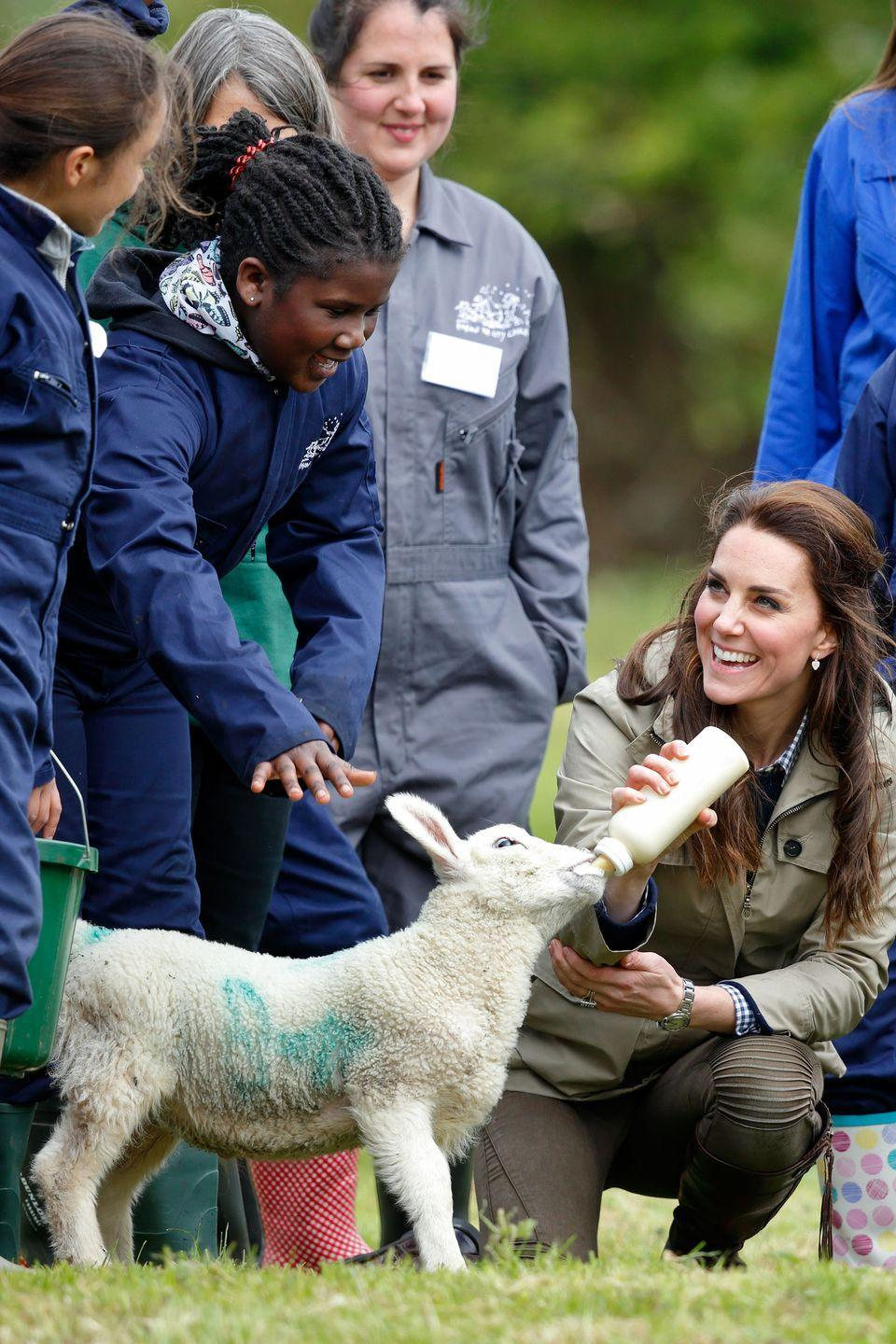 <p>Middleton bottle-feeds a lamb as she visits Farms for City Children in Arlingham, England.</p>