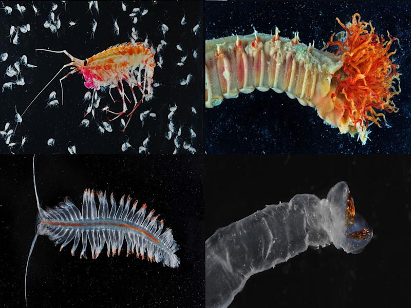 Creatures such as these could be discovered on the seabed. Pic: British Antarctic Survey